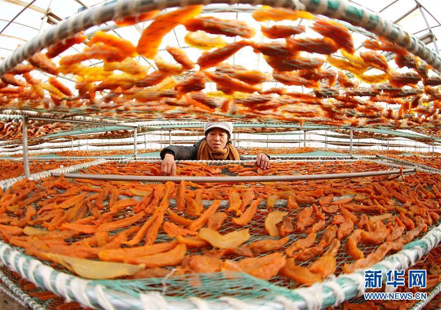 (经济)(1)河北卢龙:鲜食甘薯深加工促增收