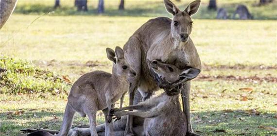 宝宝 透过/袋鼠妈妈临死前一幕试图握住宝宝的手