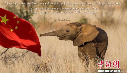 小说《大象孤儿》揭示象牙贸易惊心内幕