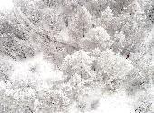 (环境)(1)阿尔山雾凇惹人醉