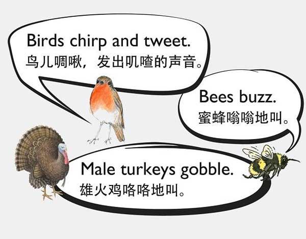 自然界中有各种声音 如何用英语来描述动物的叫声?