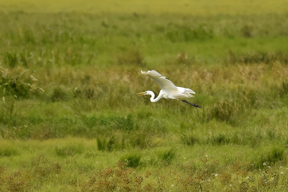 白鹭沐浴秋色,享受着当地良好生态带来的惬意。(人民网记者 翁奇羽 摄)