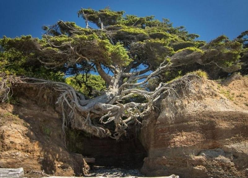 树坚强!树木绝地逢生展自然生命之美