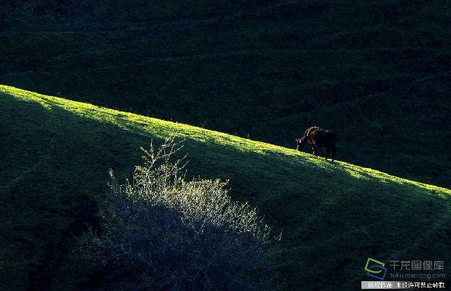 早春的新疆杏花沟。本应杏花开满的山坡的,只因今年是暖冬,春天也来得早。4月初花便已基本凋落。20160415