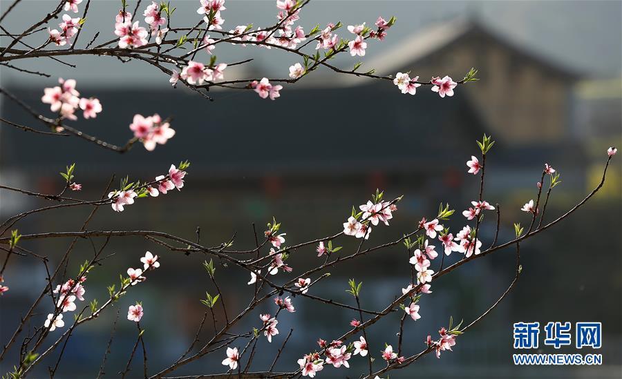#(生态)(1)春到苗寨