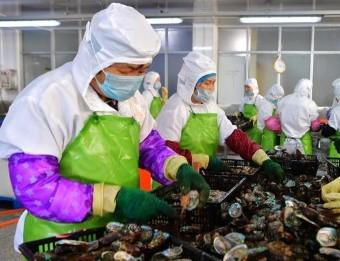 (经济)(5)福建连江:小鲍鱼 大产业