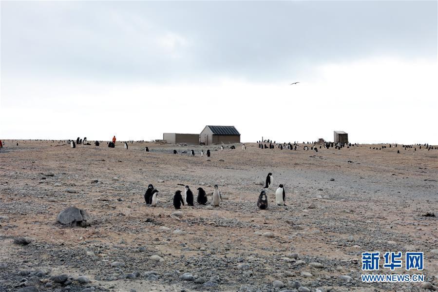 (第34次南极科考)(1)中国科考队参与修护南极历史遗迹建筑