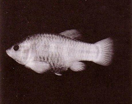 组图:渔民捕获胭脂鱼王 盘点近年灭绝的珍稀动物