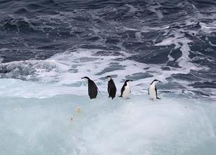 (第32次南极科考)(8)印象南极:冰山奇观