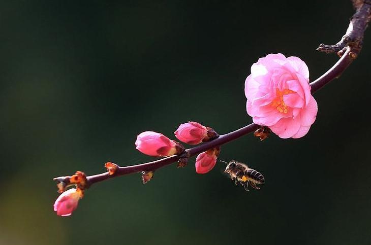 #(生态)(6)春回大地