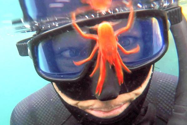 """美国潜水员潜水遭到一群龙虾""""调戏"""" 画面逗趣【2】"""