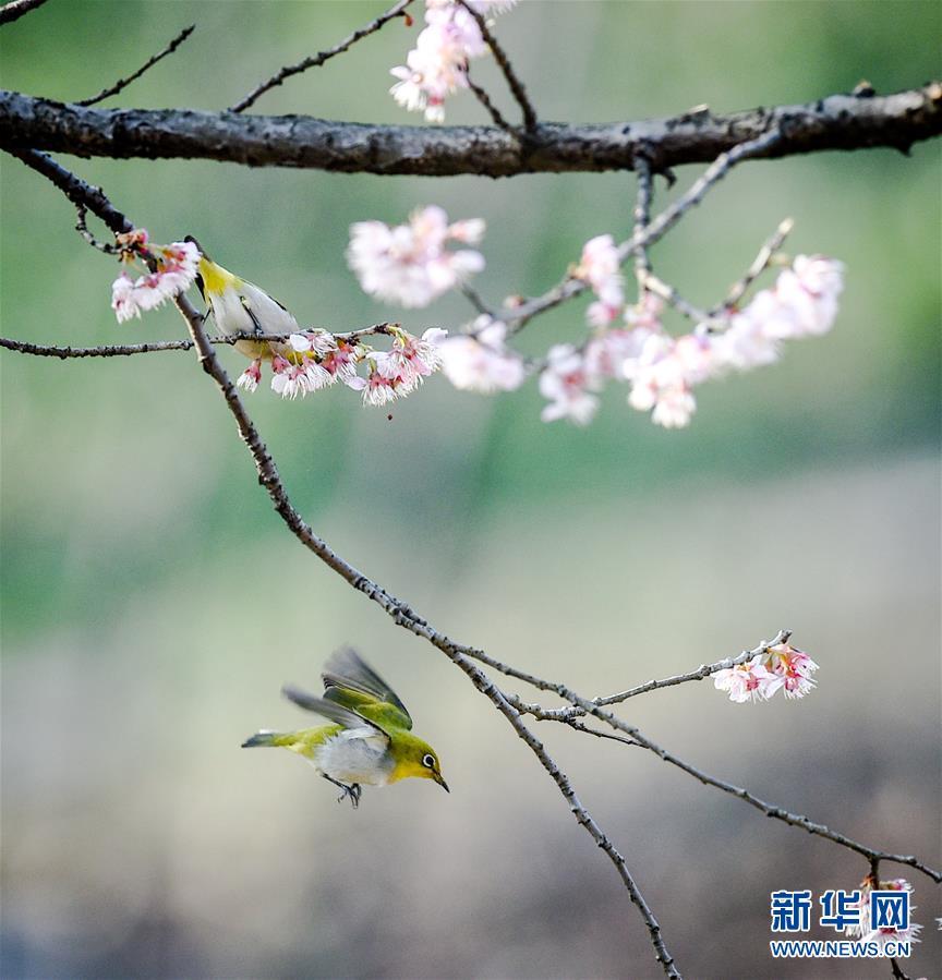 (环境)(1)春鸟闹花枝