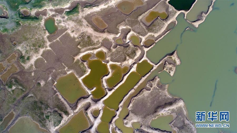"""(生态)(3)鄱阳湖进入枯水期 展现""""骨感之美"""""""