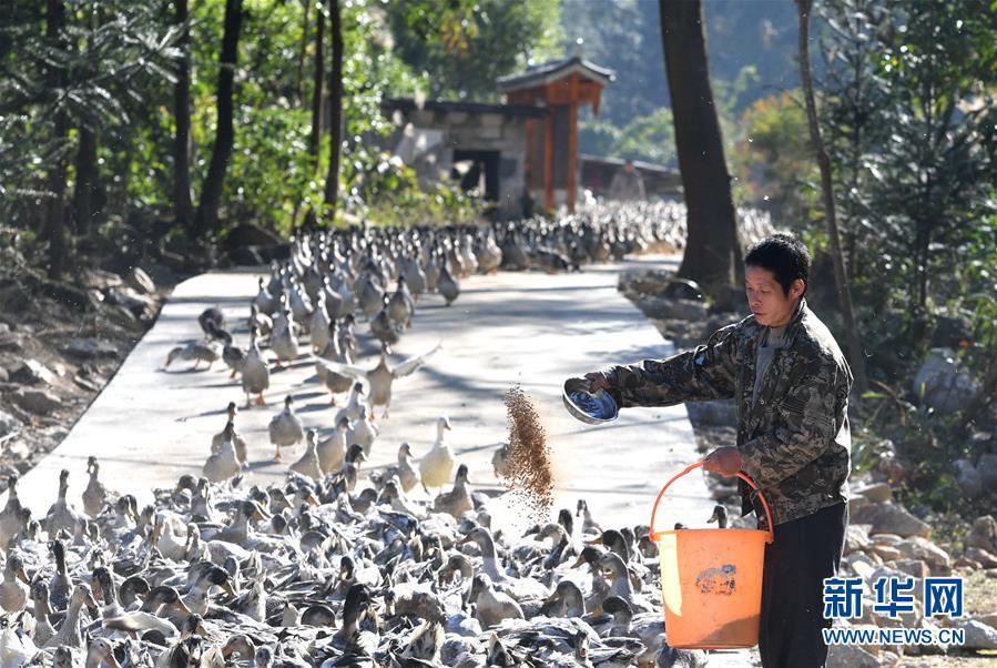 (经济)(2)广西融水:特色产业助脱贫
