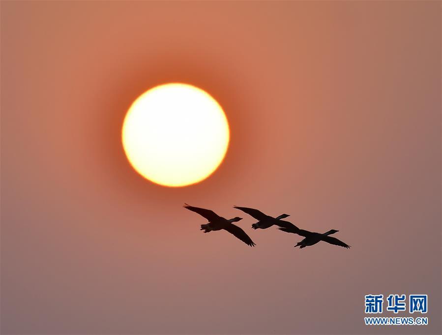 (环境)(2)夕阳渡飞鸟