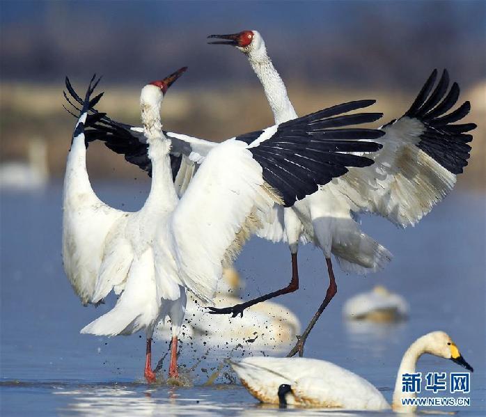 (环境)(2)鹤舞鄱阳湖