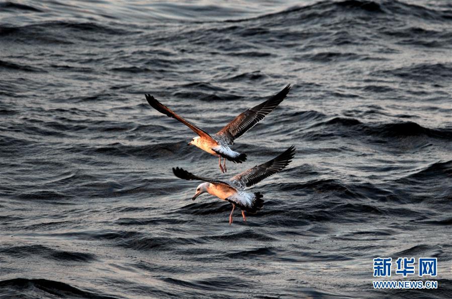 (图文互动)(1)通讯:探秘北印度洋莫克兰海沟