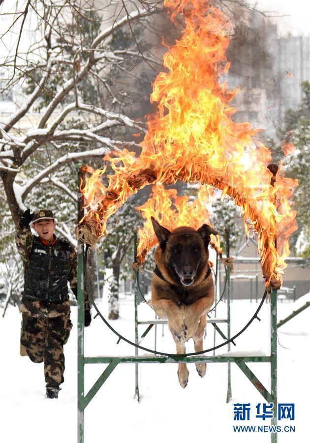 #(图片故事)(1)萌犬·奇兵·战友