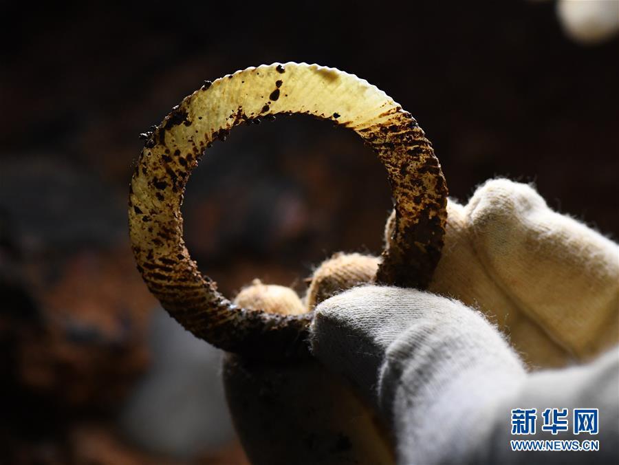 (文化)(2)海昏侯墓园五号墓主棺内提取出精美玉器