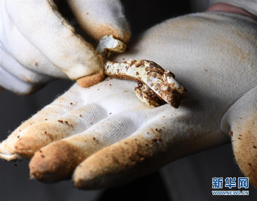 (文化)(4)海昏侯墓园五号墓主棺内提取出精美玉器