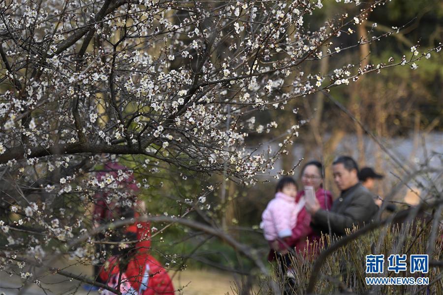 (社会)(1)杭州:灵峰探梅赏春时