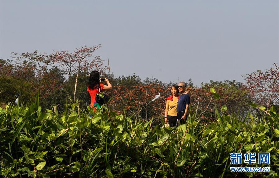 (环境)(1)层林尽染木棉红