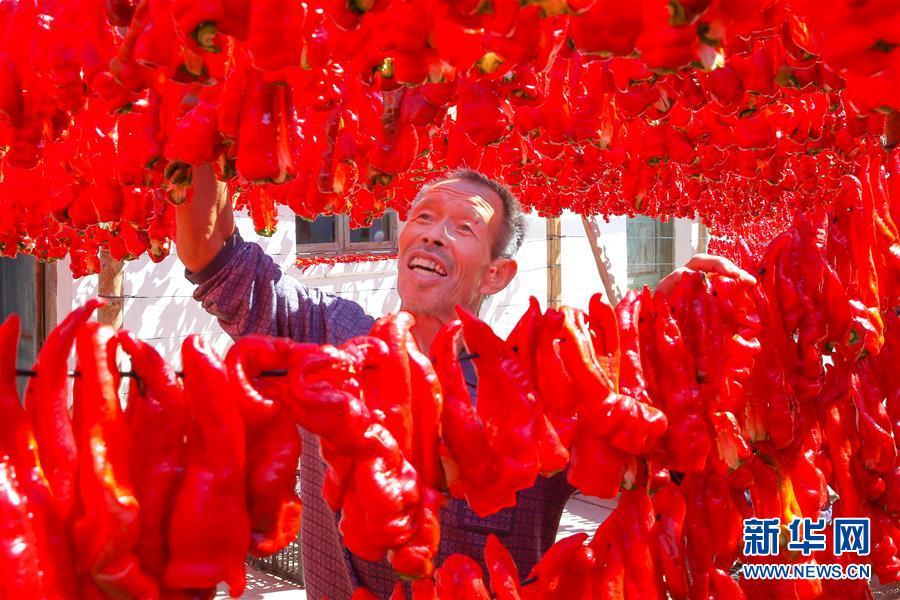 #(经济)(1)新疆哈密:三塘湖辣椒火红丰收