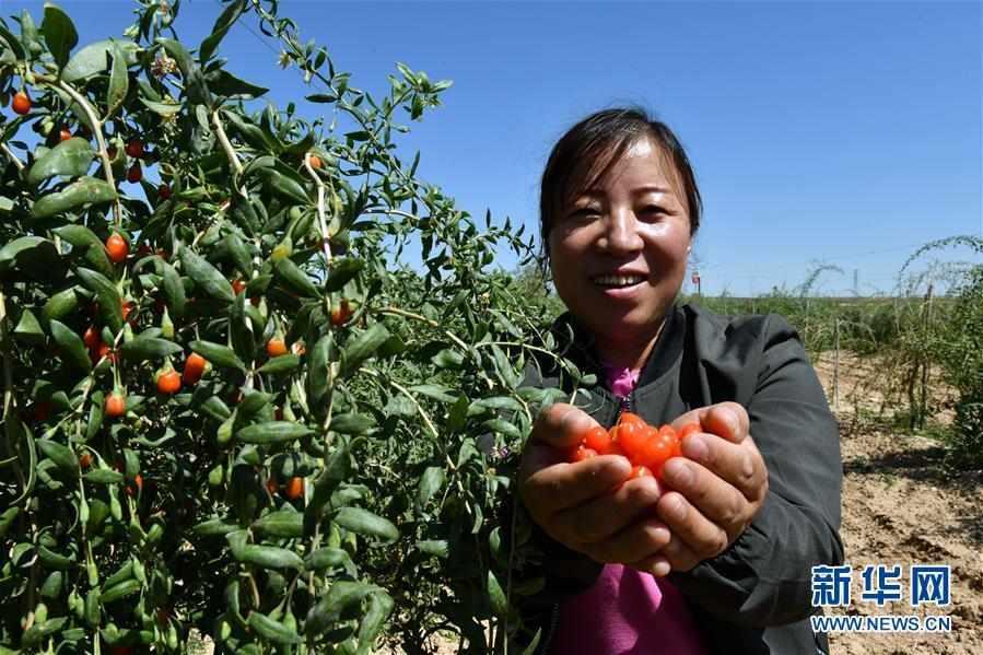 (宁夏60年)(4)宁夏红寺堡:生态移民的绿色新生