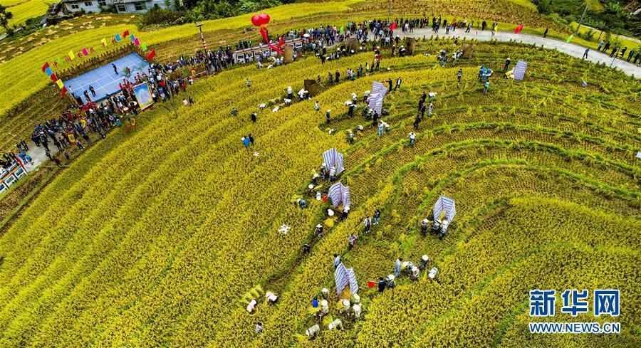 (丰收的味道)(1)古梯田上的丰收打谷节