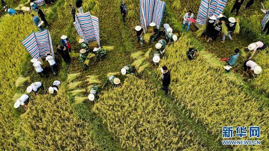 (丰收的味道)(2)古梯田上的丰收打谷节