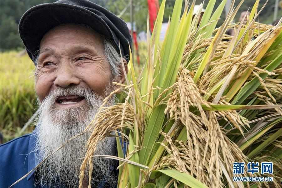 (丰收的味道)(5)古梯田上的丰收打谷节