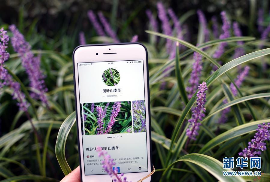 """(科技)(2)植物园里体验""""拍照识花"""""""