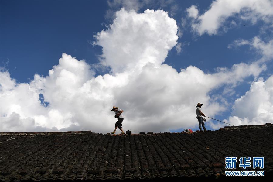 """(关注""""山竹"""")(1)广西金秀:台风过后重建忙"""
