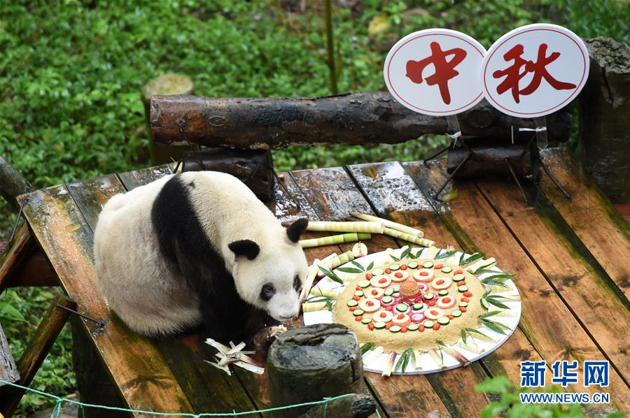 (社会)(2)重庆:手工月饼送给大熊猫