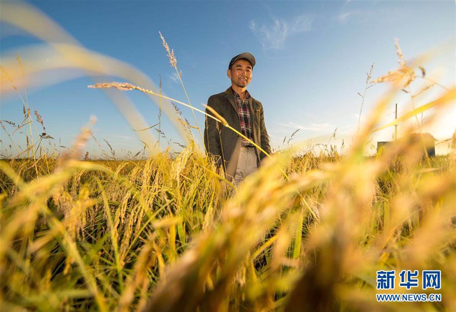 (丰收的味道)(图文互动)(2)稻人有道——种粮大户李学明的十余年坚守