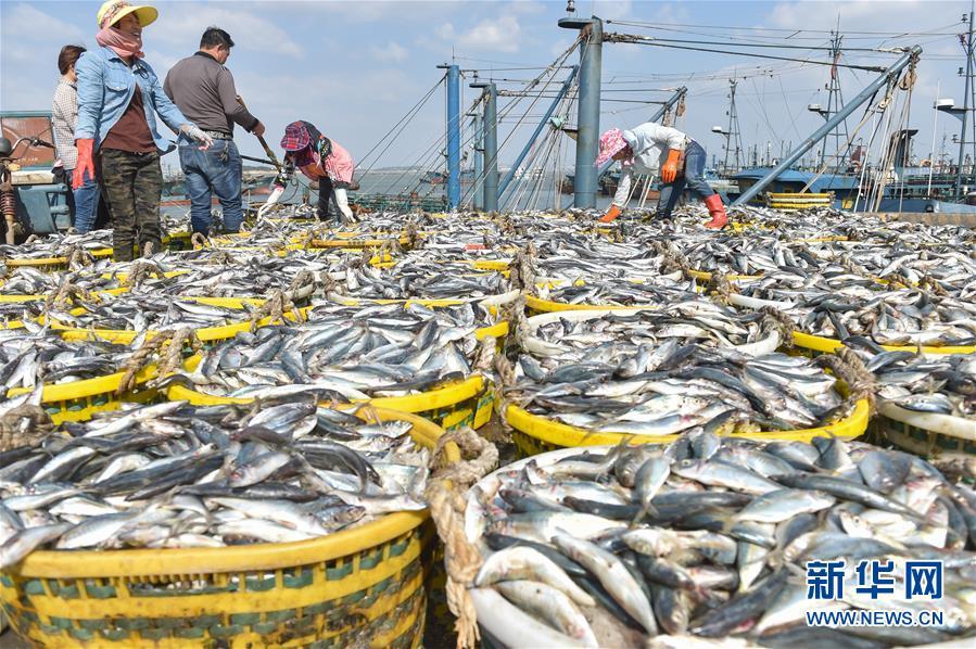 (经济)(1)国庆渔港收获忙