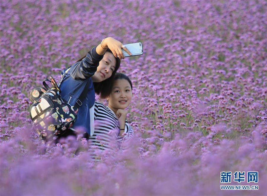 #(社会)(6)国庆假期全国共接待国内游客7.26亿人次