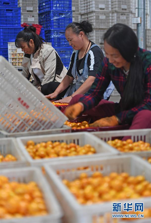 (脱贫攻坚)(2)江西南丰:蜜桔产业助力精准脱贫