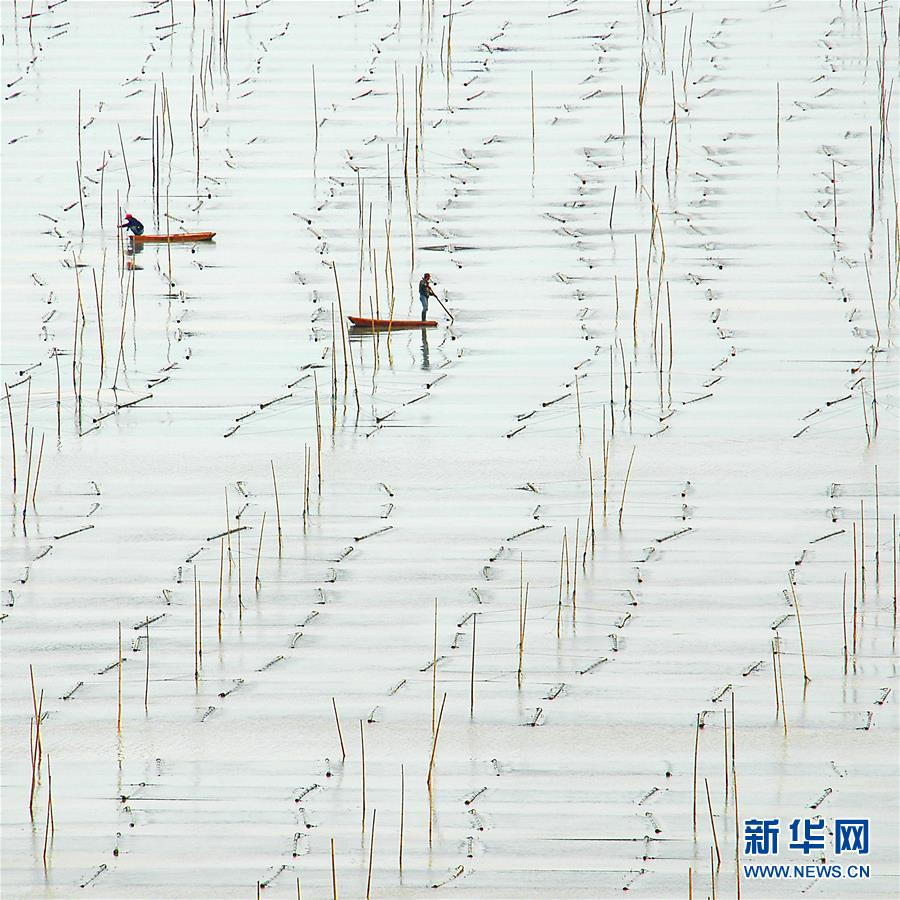#(视·觉)(1)霞浦滩涂美如画