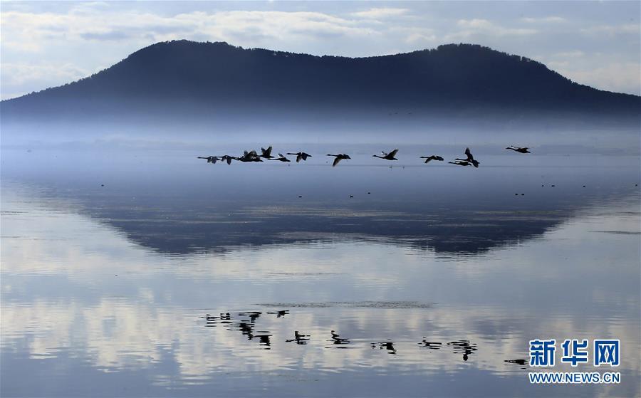 #(美丽中国)(1)山东荣成:天鹅湖景美如画