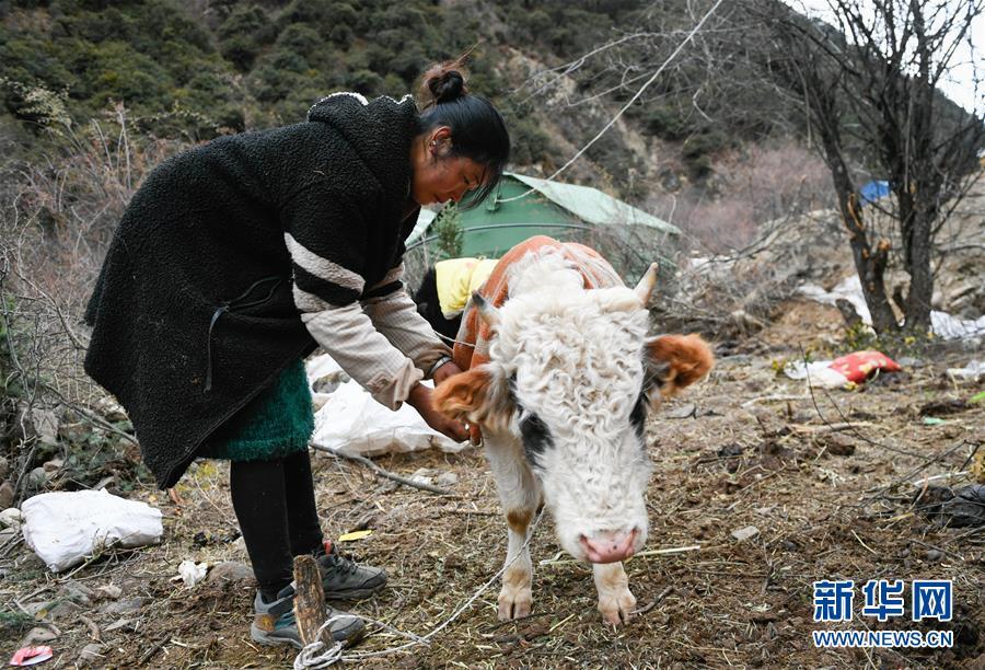 (图文互动)(4)生活物资供应充足 群众安全有保障——西藏金沙江堰塞湖安置点见闻