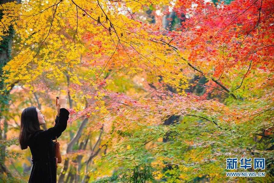 #(环境)(1)初冬美景如画