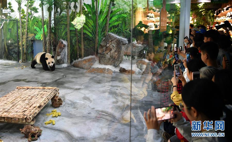 (社会)(1)大熊猫亮相海口