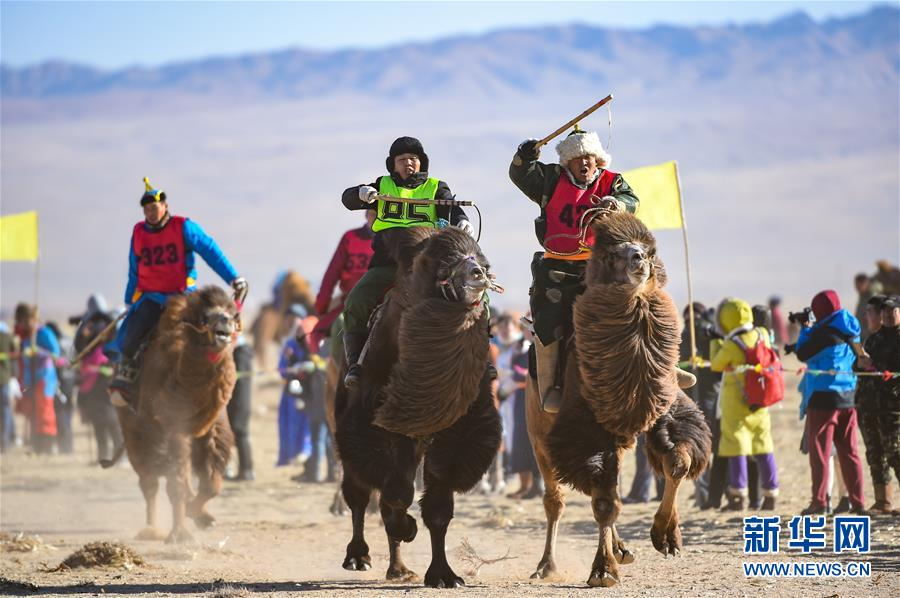 (社会)(1)内蒙古乌拉特后旗举行骆驼文化旅游节