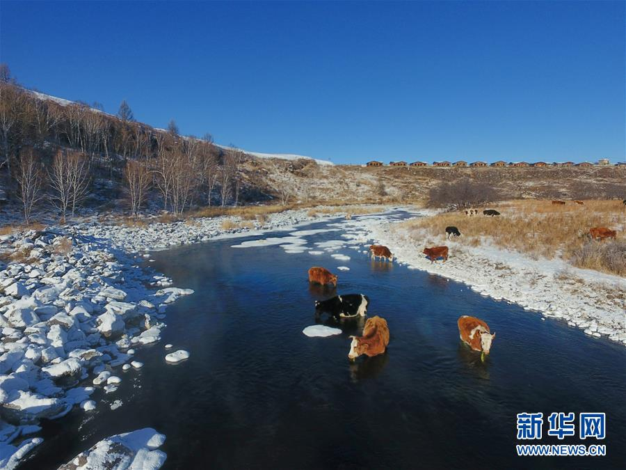"""(环境)(1)严寒中的""""不冻河"""""""