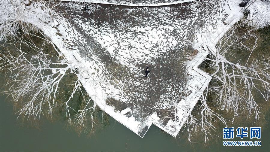 (社会)(4)雪落合肥景色美