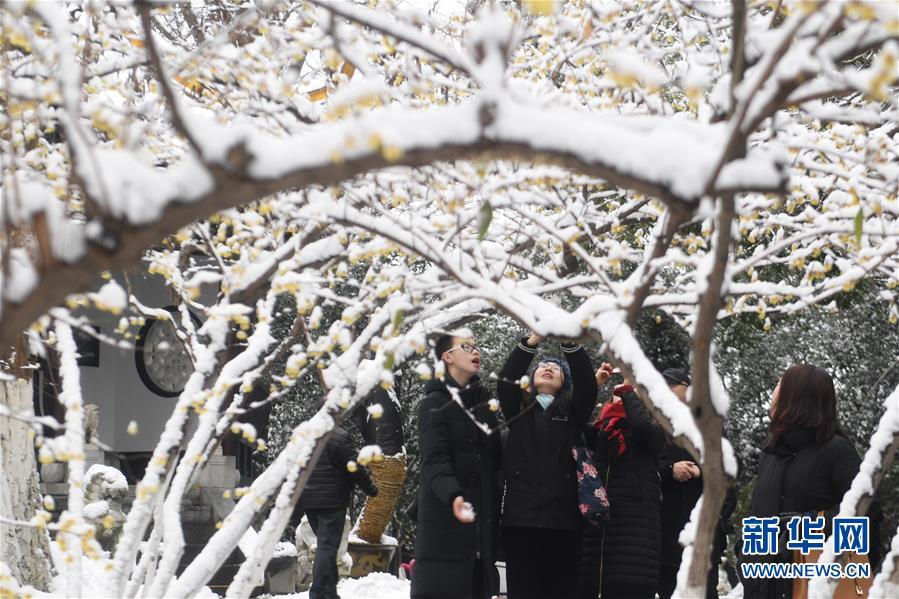 (社会)(6)雪落合肥景色美