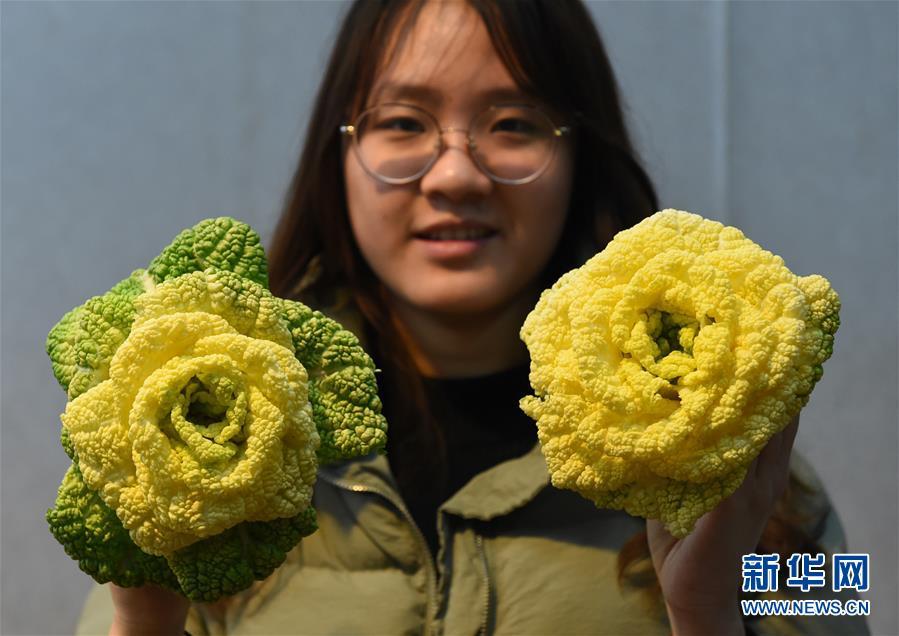 """(社会)(1)南京:""""玫瑰白菜""""面市"""