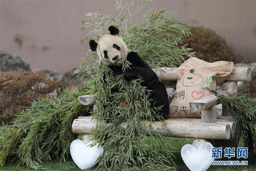 """(国际)(1)大熊猫""""永明"""":我收到礼物了!"""