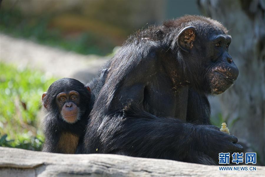 """(国际)(1)新加坡动物园里的""""新生儿"""""""